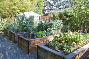 These are a few of our raised beds.